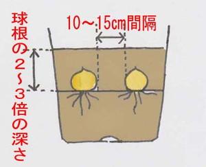 kyukon-uetike (1)