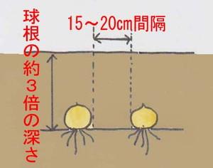 kyukon-uetike (2)