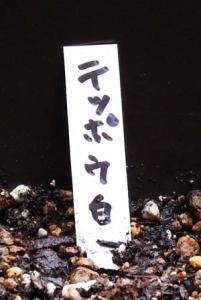 yurikyukon-hatiue017
